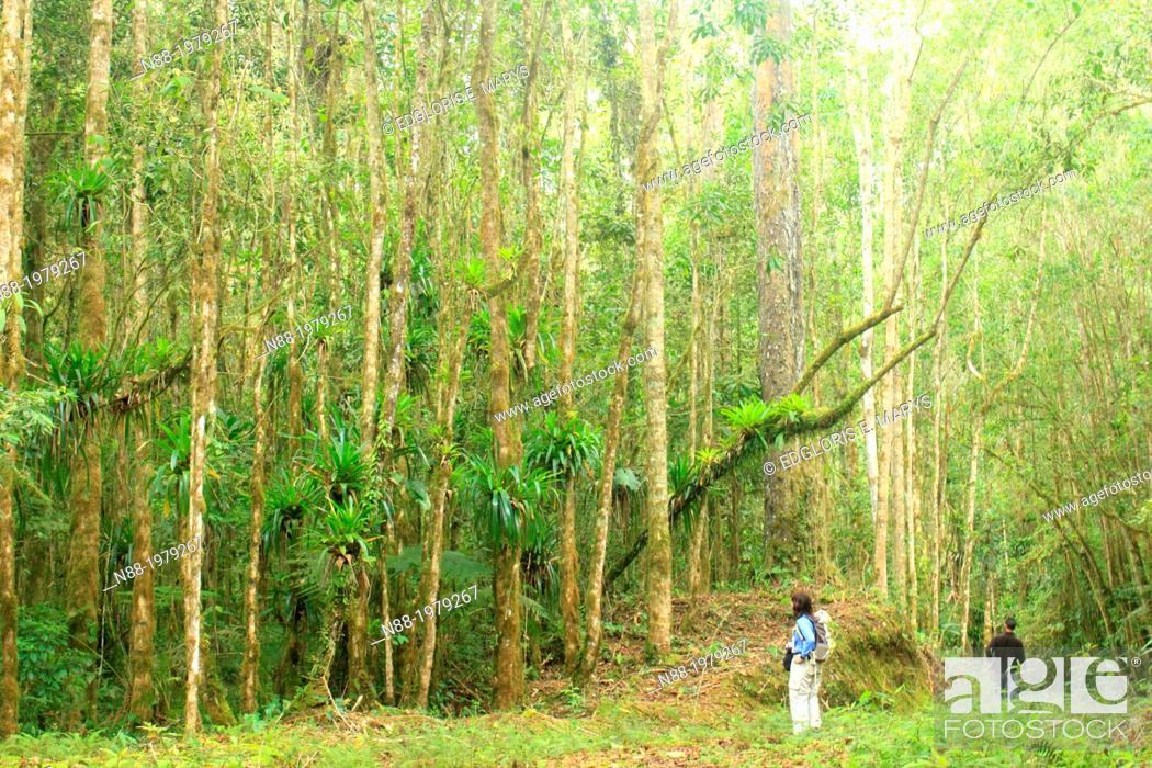 Stock Photo: San Eusebio Cloud Forest Merida Venezuela.