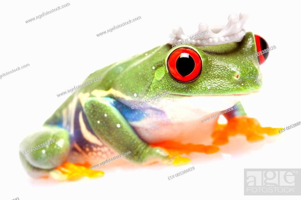 Stock Photo: Green Frog in concepts.