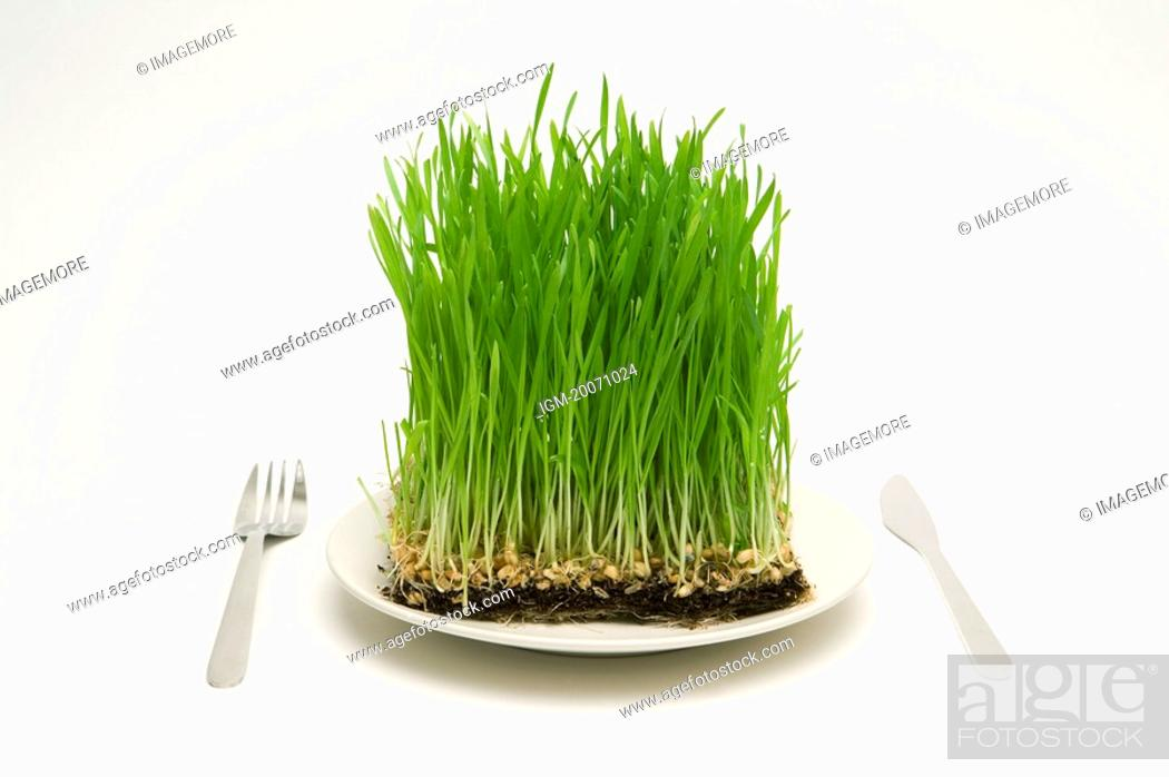 Stock Photo: Grass served on a plate, with knife and fork.