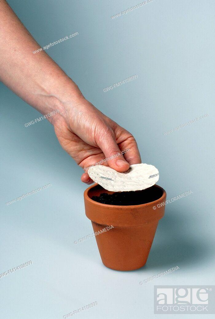 Stock Photo: PLANTING SEEDPLATE INTO POT- LEPIDIUM SATIVUM (CRESSIDA OR CURLY CRESS).