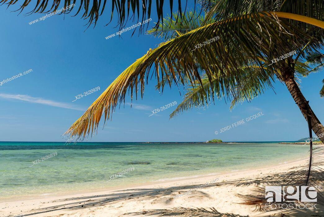 Stock Photo: Palm on the beach, Koh Kood island, Ko Kut district in Trat Province, Thailand, Asia.