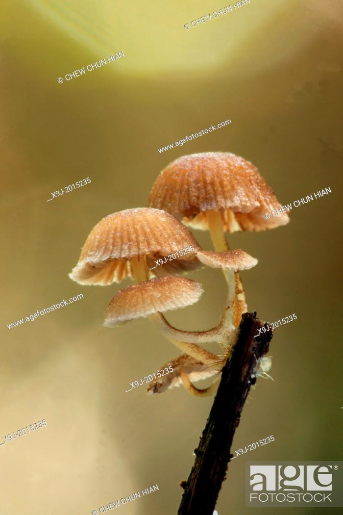 Stock Photo: Mushroom, Fungi on tree trunk, borneo.