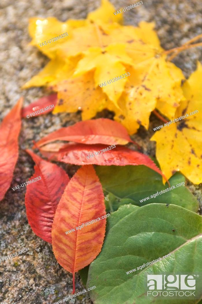 Stock Photo: Autumn, Focus On Foreground, Day, Close-Up, Assortment.