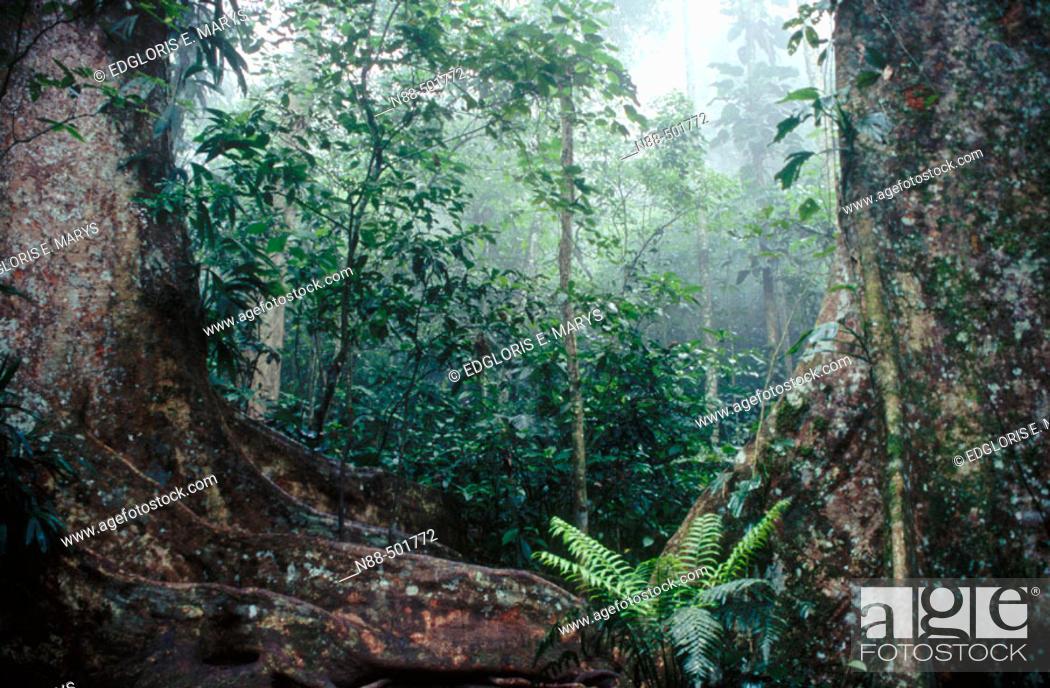 Stock Photo: Cloud forest, Henri Pittier National Park, Venezuela.