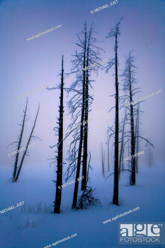 Stock Photo: Dead trees come alive amongst the fog, steam and early morning sunlight at Yellowstone National Park, Wyoming.