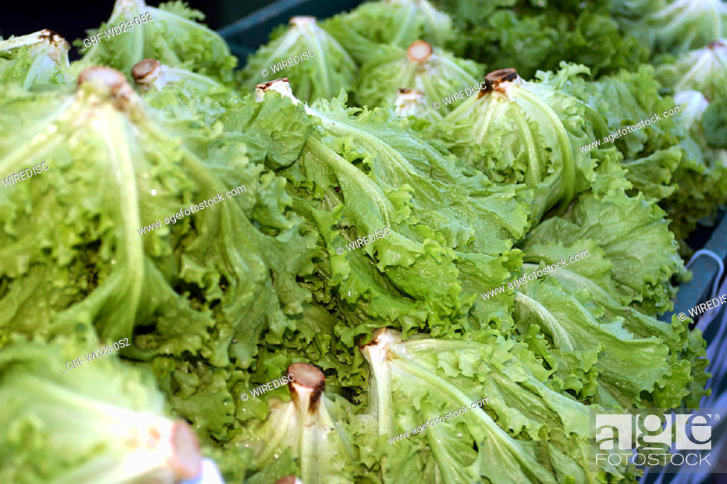 Stock Photo: Lettuce, market, agriculture, Brazil.