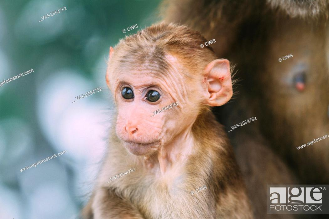Stock Photo: Close up of the face a baby monkey.