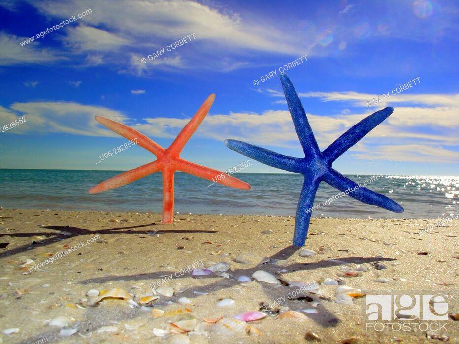 Stock Photo: Dancing starfish.