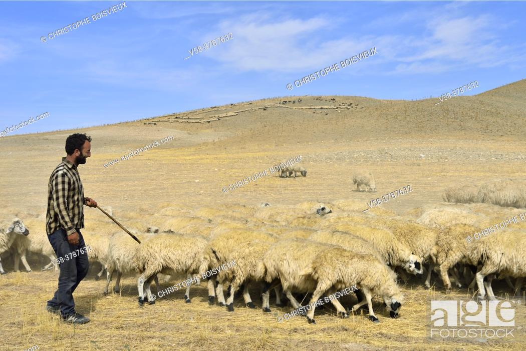Stock Photo: Iran, West Azerbaijan province, Qareh Ziya Eddin region, Kurdish shepherd.