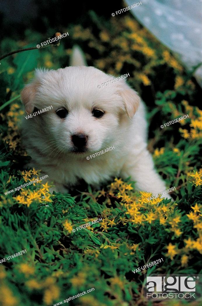 Stock Photo: puppy, dog, canines, domestic, flower, pup.