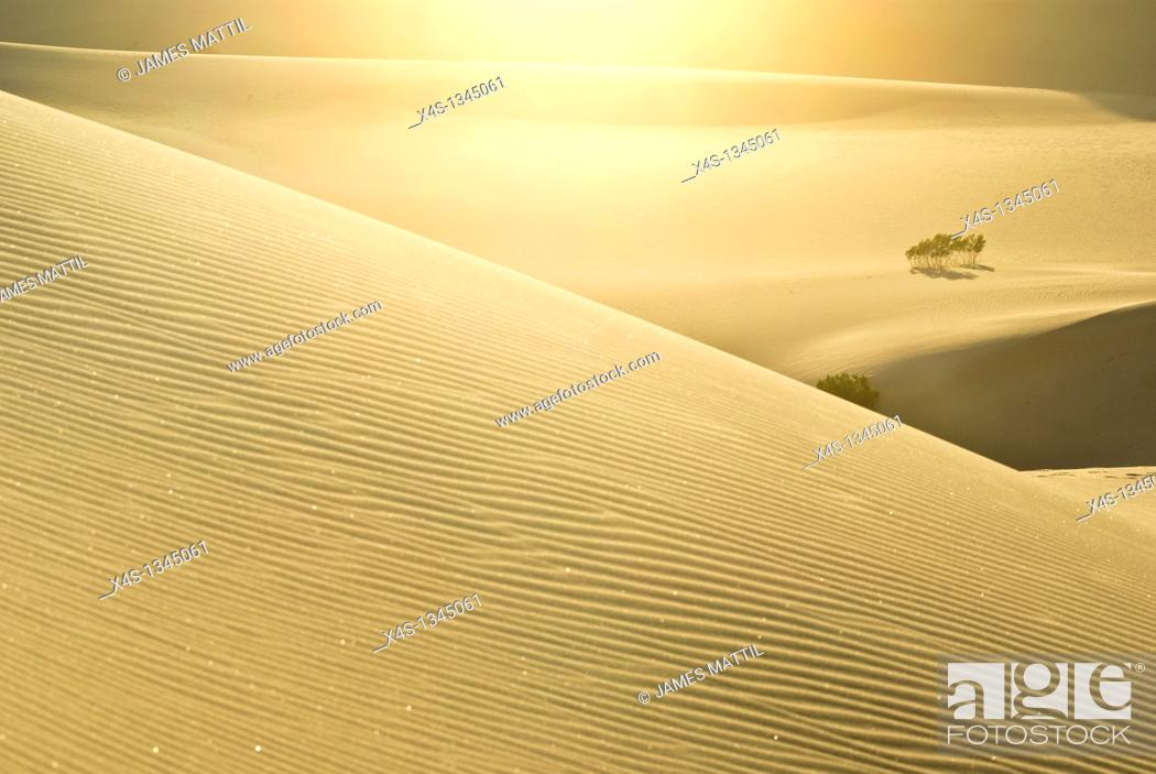 Stock Photo: Sunlight glistens in the sparkling and rippled sands of dunes in Death Valley, California.