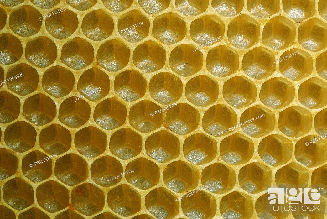 Stock Photo: Honeycomb. Hexagonal cells.