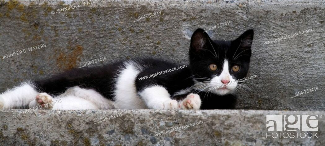 Stock Photo: A black and white kitten on concrete steps.