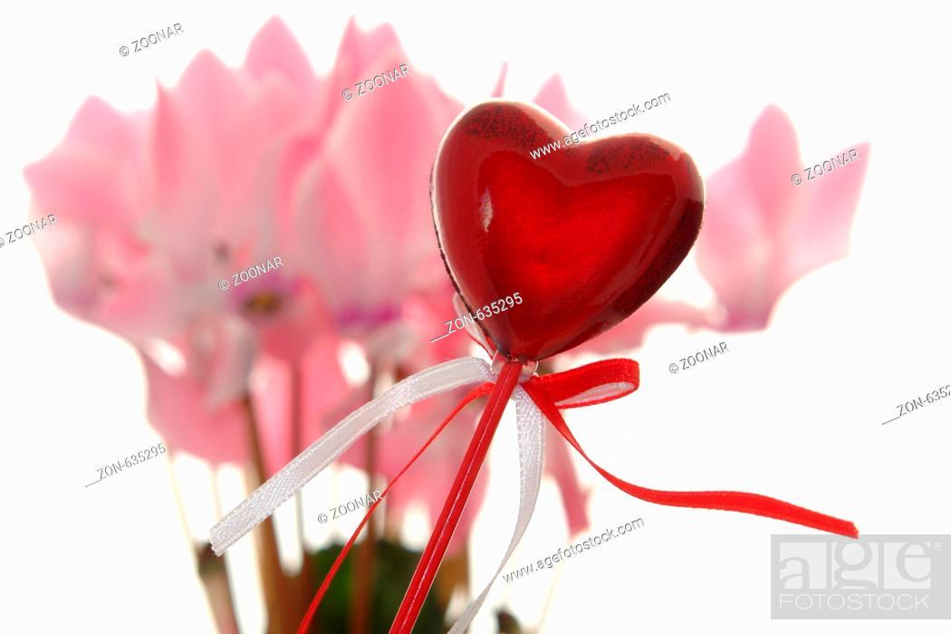 Muttertag Valentinstag Herz Alpenveilchen Cyclamen Blume Bluten