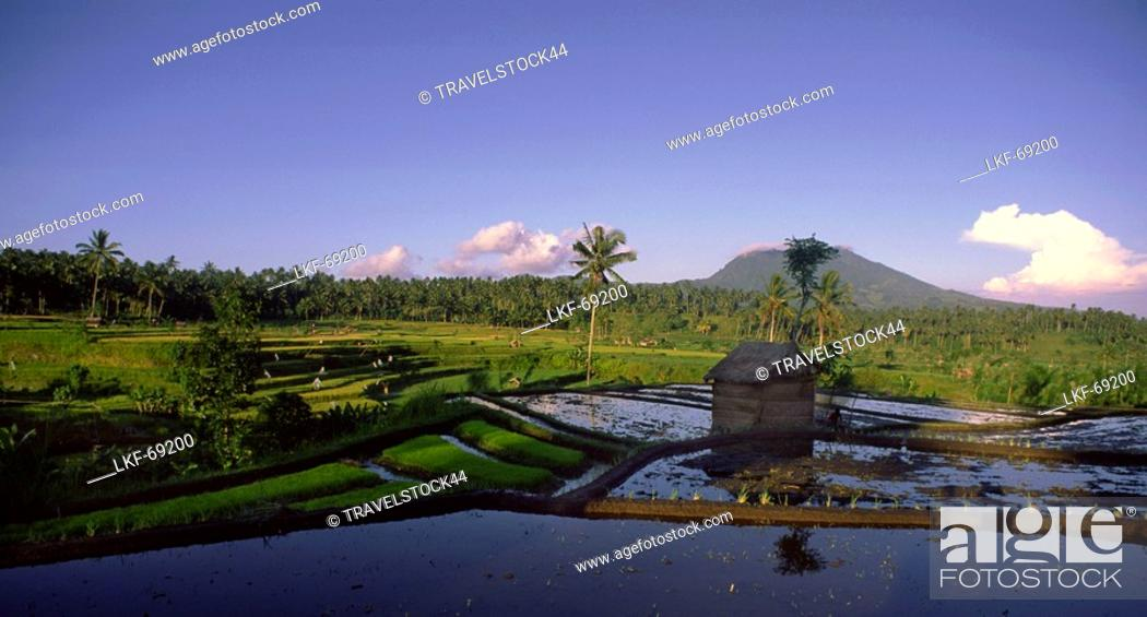 Stock Photo: Mt. Agung, rice fields, Indonesia.