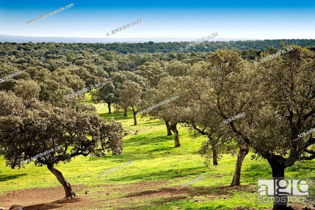 Stock Photo: Valle de los Pedroches, Córdoba province, Spain.