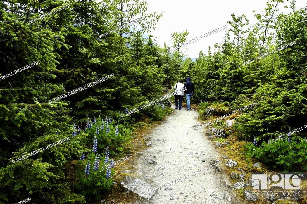 Stock Photo: Couple walking along lupine-lined trail in Alaska's Mendenhall Glacier Park.