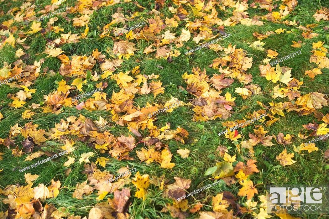 Stock Photo: Day, Greenery, Grass, Dead Plant, Autumn.
