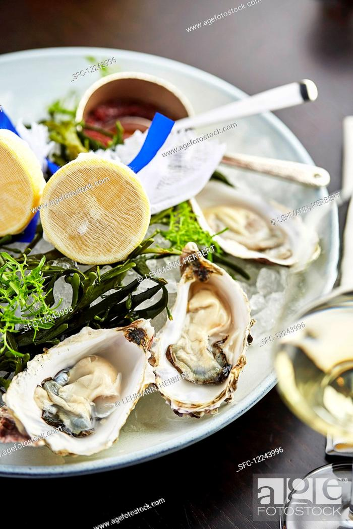 Stock Photo: A plate of oysters and a glass of white wine.