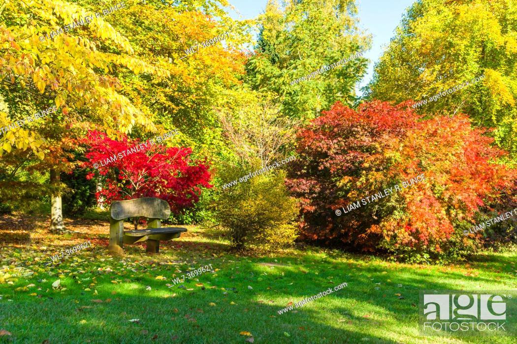 Stock Photo: A quiet retreat amongst the beautiful Autumn colours of the Japanese Maples, Bodenham Arboretum Worcestershire UK. October 2020.