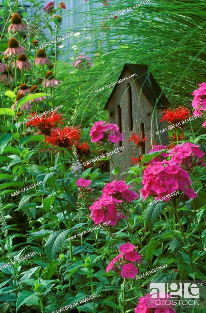 Stock Photo: Butterfly House w/Phlox (Phlox paniculata) & Bee Balm (Monarda sp.) garden IL.