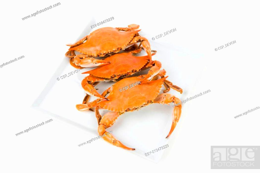 Stock Photo: Crab.