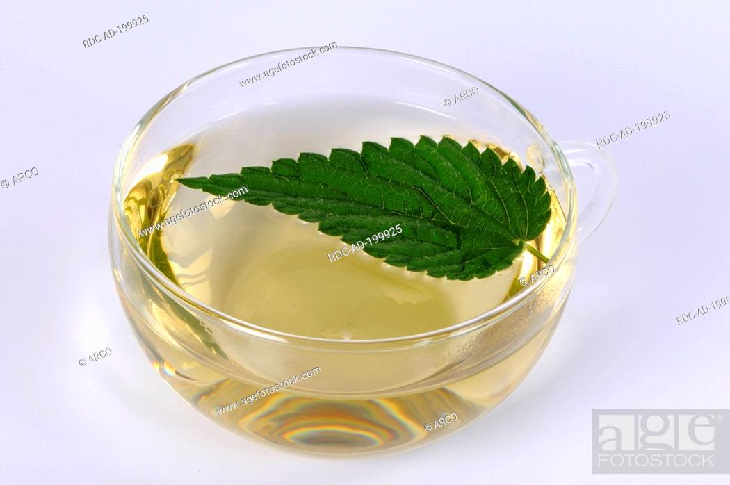 Stock Photo: Cup of Nettle tea, Urtica dioica.