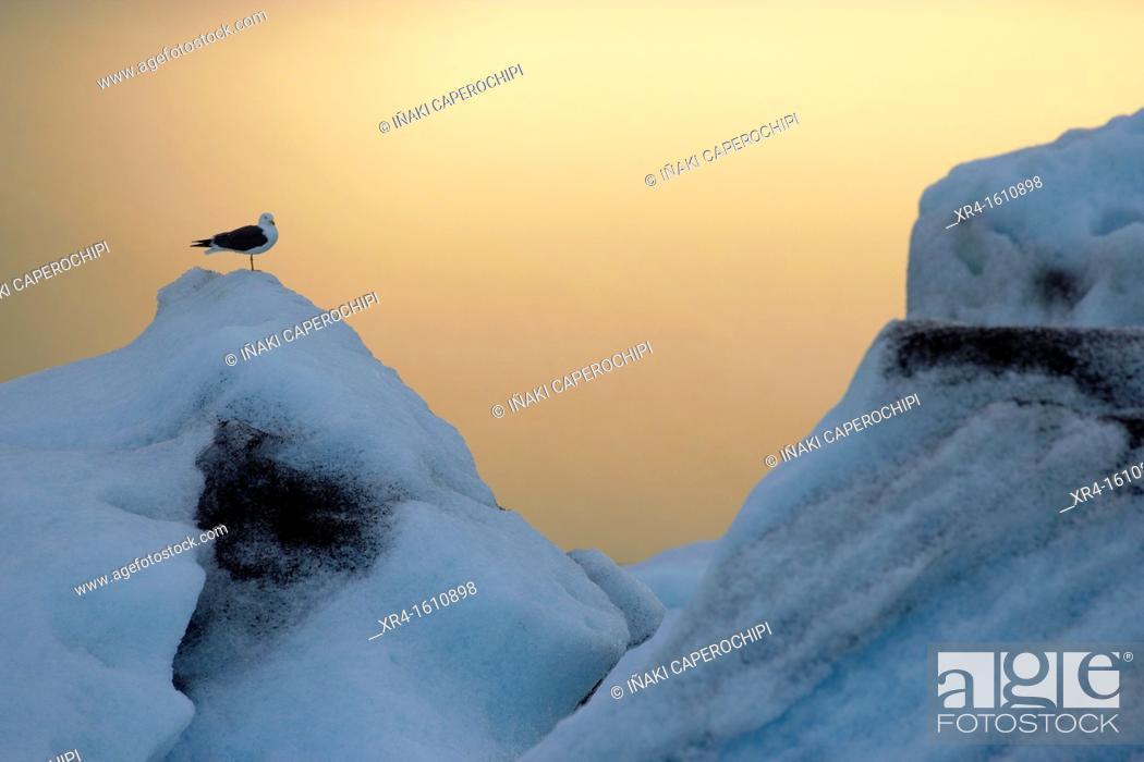Stock Photo: Jokulsarlon Glacier Lagoon, Iceland.