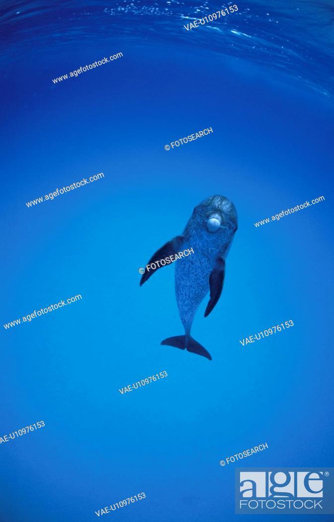 Stock Photo: Dolphin.