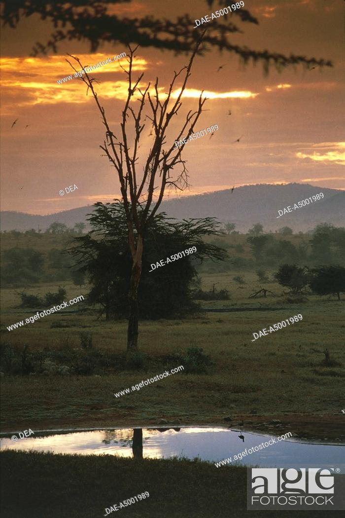 Stock Photo: Kenya. Tsavo National Park. Sunset.