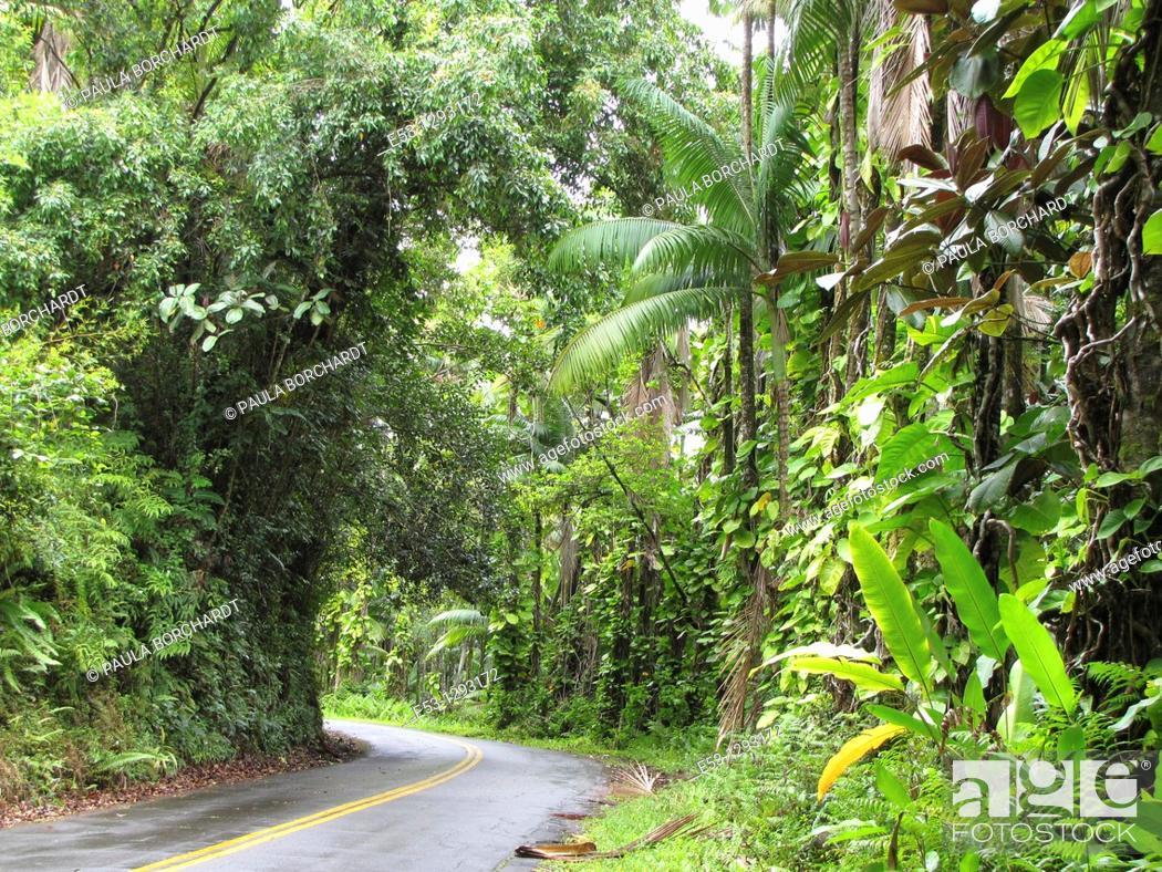 Stock Photo: Old Hawaiian highway north of Hilo, Big Island, Hawaii, USA.