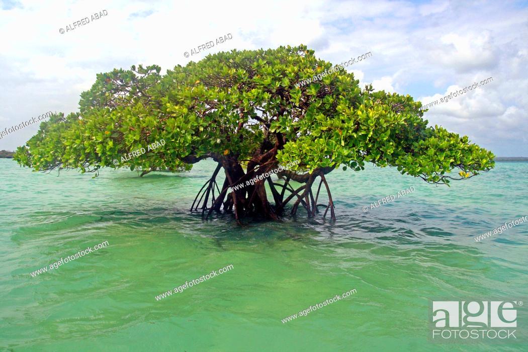 Photo de stock: mangroves, Kizimkazi, Unguja island, Zanzibar.