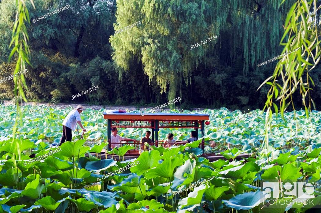 Stock Photo: A boat punting through lily pads at Zizhuyuan Black Bamboo Park, Beijing, China, Asia.