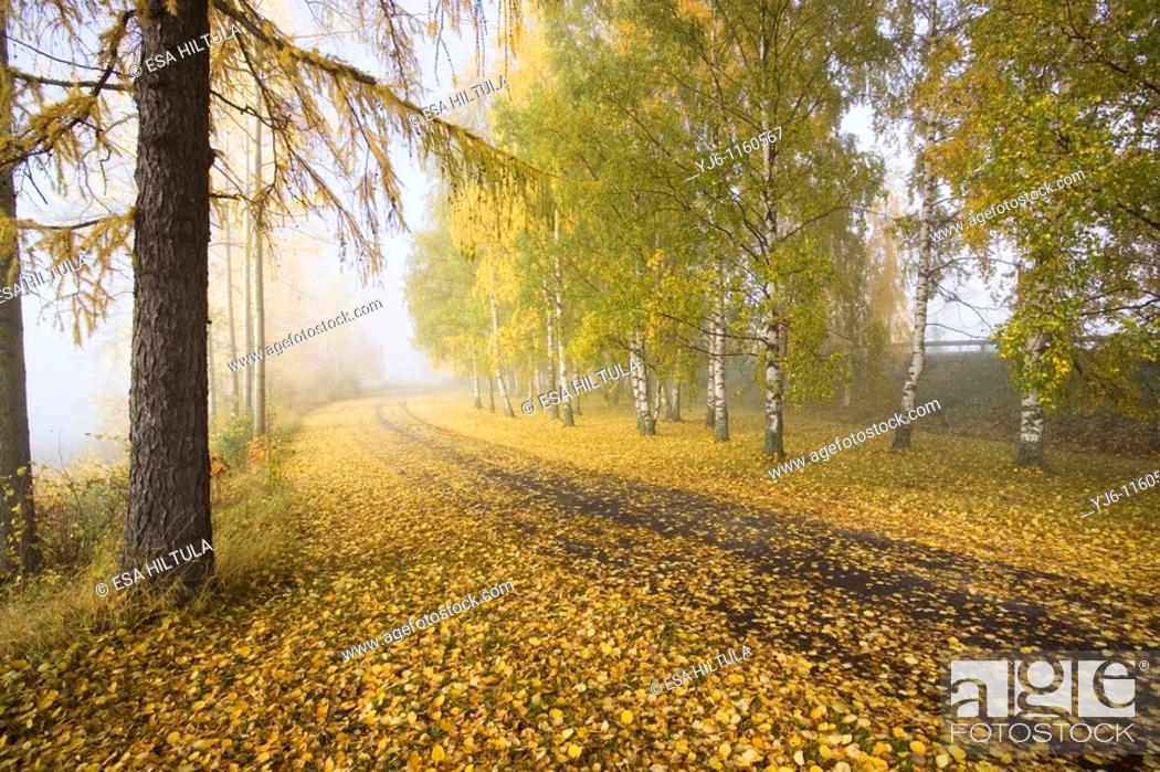 Stock Photo: autumn scenery, Finland.