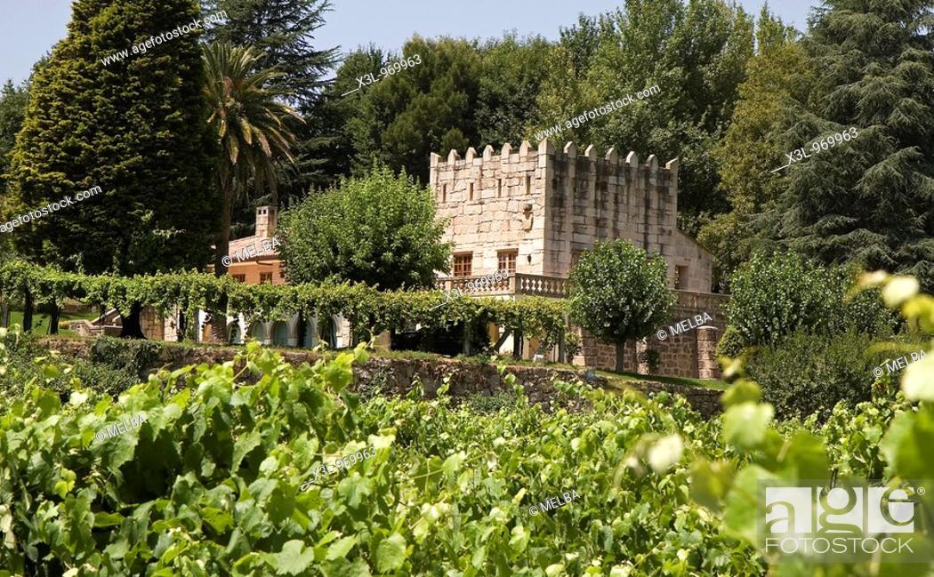 Stock Photo: Vineyard  Pontevedra  Galicia  Spain.
