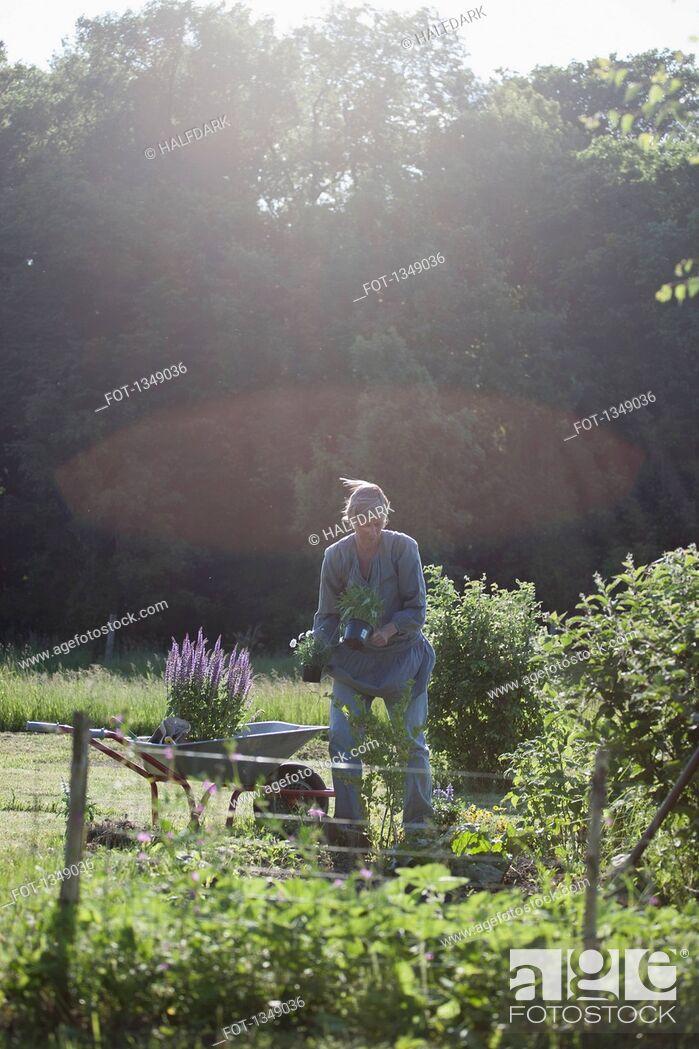 Stock Photo: Mature woman loading flower pots in wheelbarrow at garden.