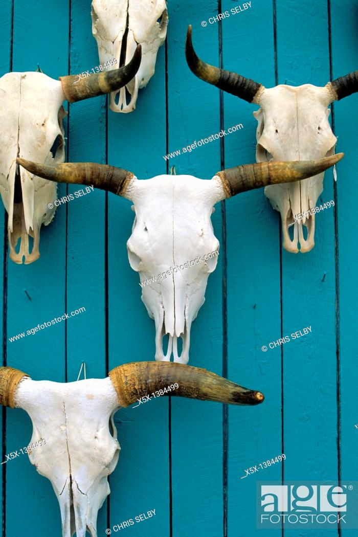 Stock Photo: Skulls displayed on a turquoise wall in New Mexico, USA.