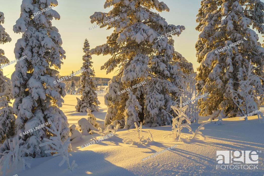 Stock Photo: Winter landscape in afternoon light with nice color in the sky, snow on the trees, Gällivare county, Swedish Lapland, Sweden.