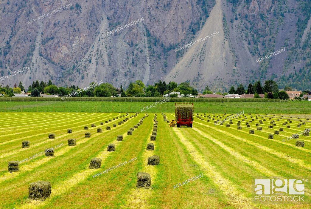 Stock Photo: Farmer picks up hay bales during the summer near Keremeos in the Similkameen Valley region of British Columbia, Canada.