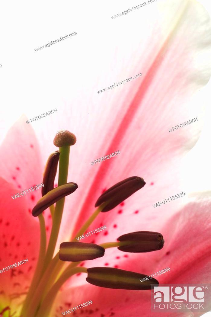 Stock Photo: Bloom, Blossom, Foliage, Nature.