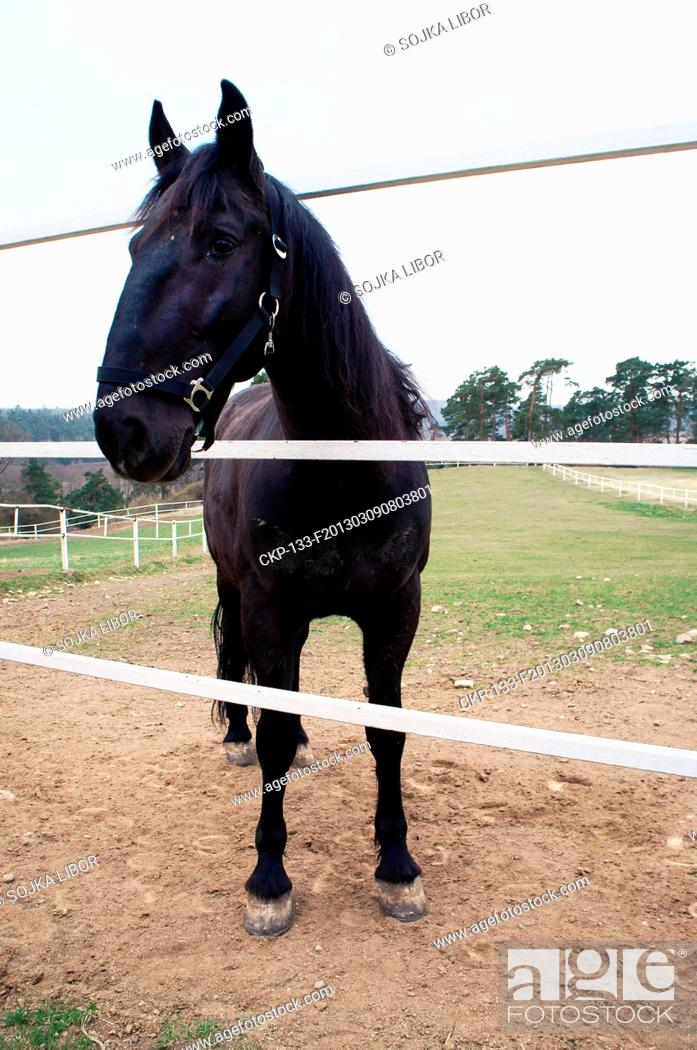Black Kladruber Horse The Oldest Czech Horse Breed And One Of The