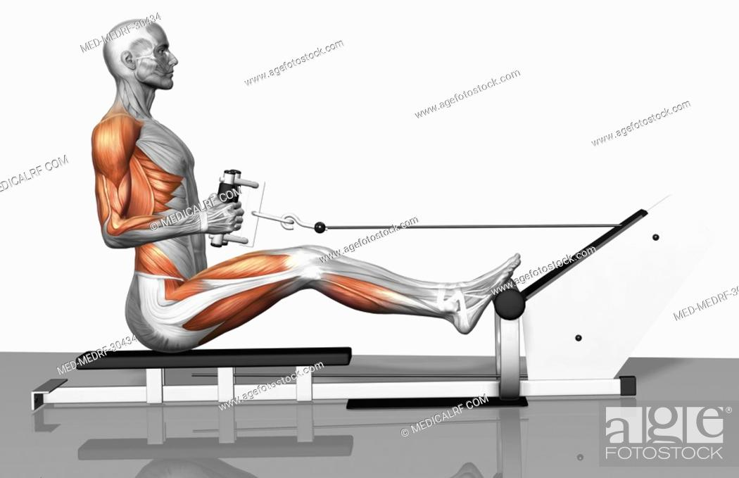 Stock Photo: Cable row exercise Part 1 of 2.