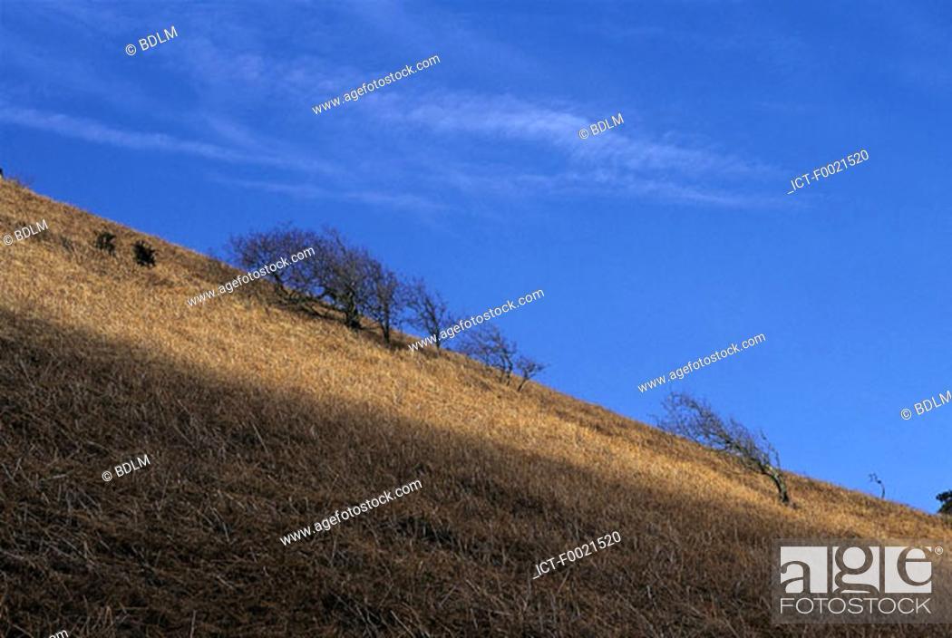 Stock Photo: Channel Islands, Jersey, windy hill.