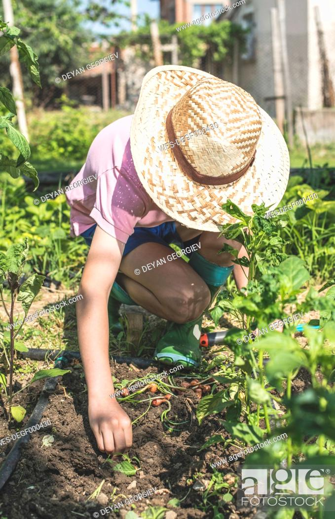 Imagen: Boy with straw hat planting bulbs in a garden.