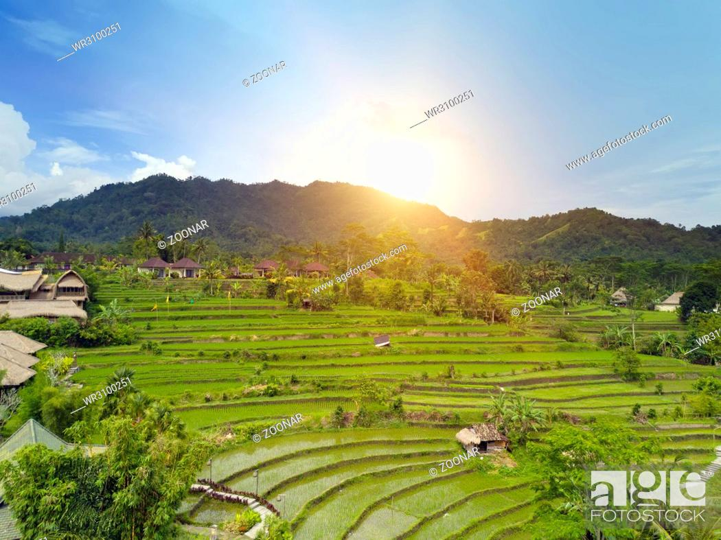 Stock Photo: Aerial view from drone on rice terraces. Indonesia. Bali.