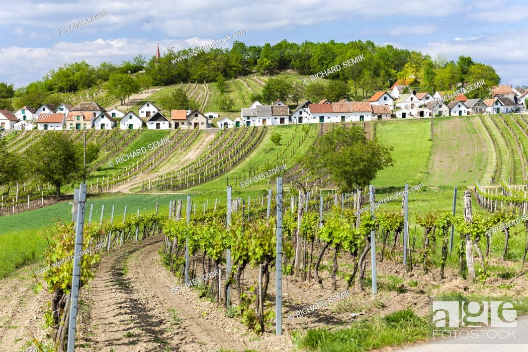 Stock Photo: wine cellars with vineyards, Galgenberg, Lower Austria, Austria.