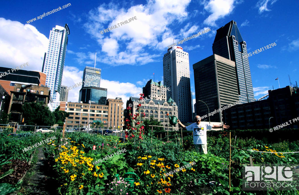 Stock Photo: Canada, Quebec, Montreal, a Community garden of the downtown.