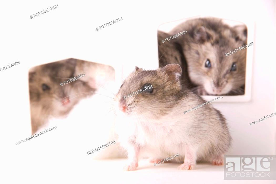 Stock Photo: tierportraits, tierfamilien, tierfamilie, alfred, animal, animal portrait.
