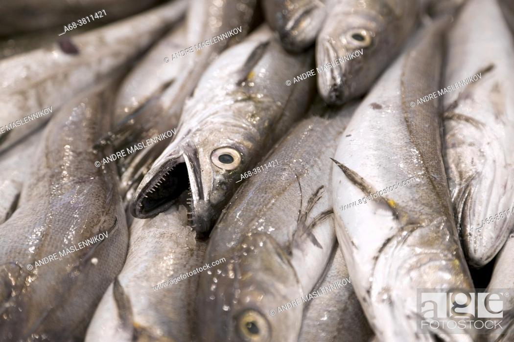 Stock Photo: Fish. Mercat de Santa Catarina. Fish.
