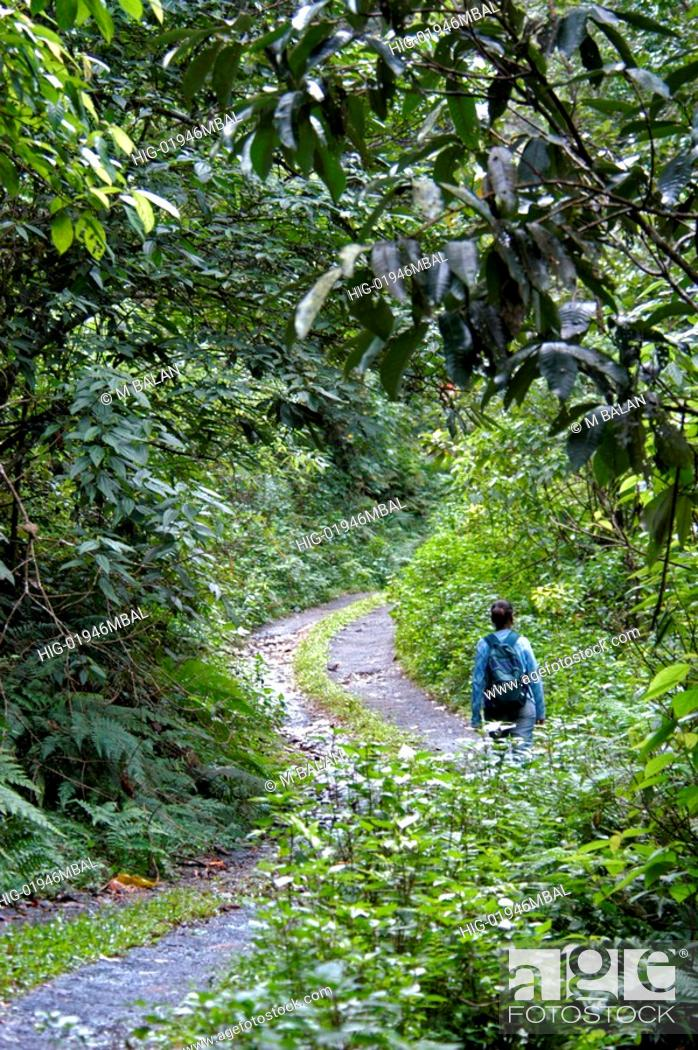 Stock Photo: TREK THROUGH JUNGLE ROAD, WAYANAD.